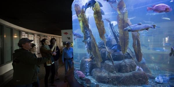 Aquarium1 (2) (1024×683)